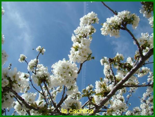 abeille-2013--13-.JPG