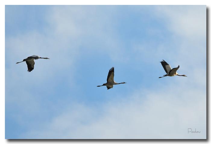 Halte migratoire