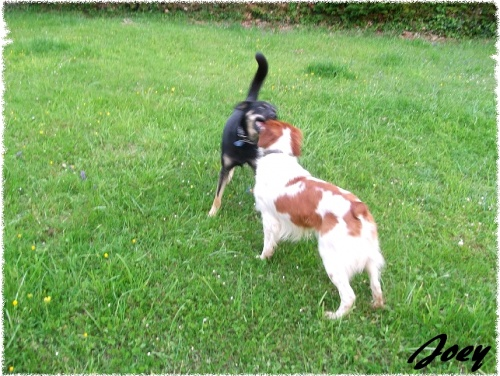 Rencontre canine