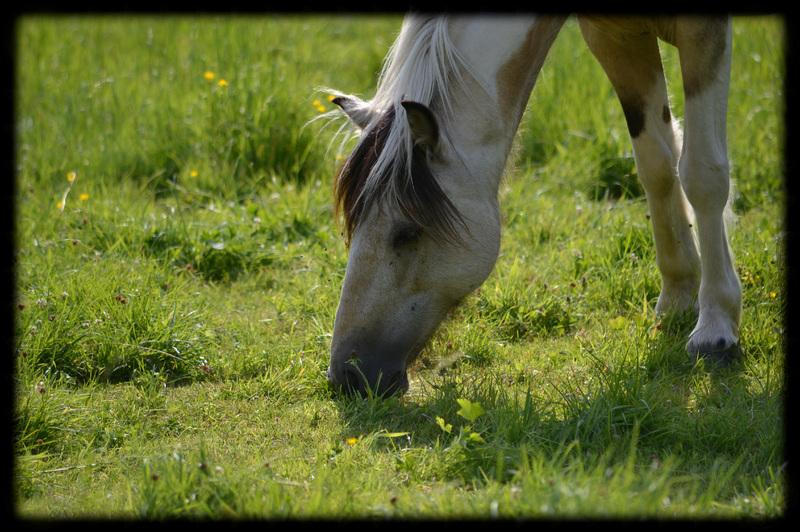 Rambouillet : Vacances pour les chevaux du Centre Equestre de la Bergerie Nationale