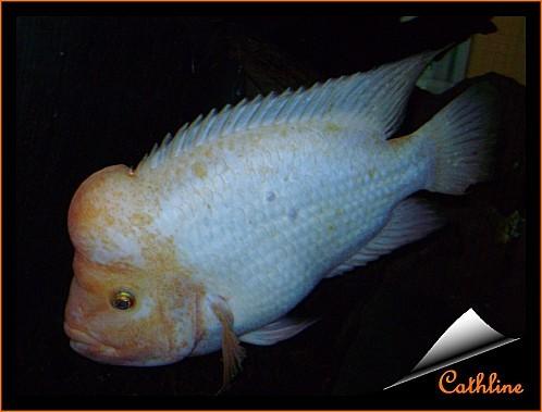poisson à identifier 2