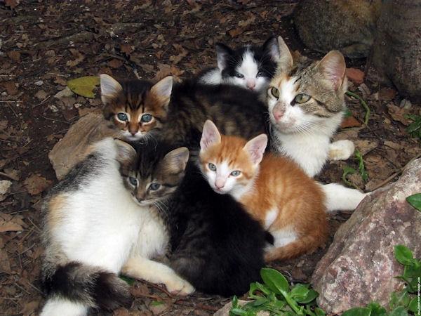 des images de chat que j'aime