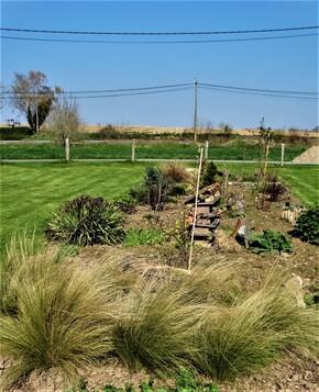 Zoom sur quelques plantations du nouveau jardin