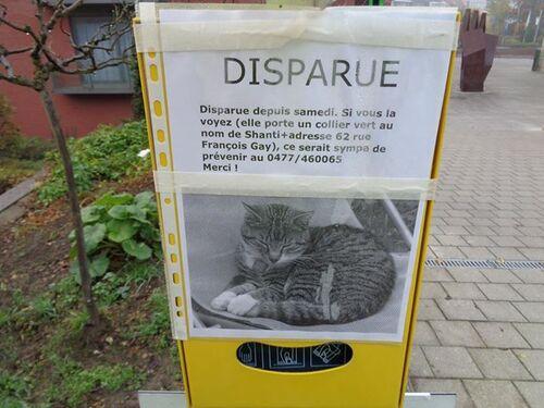 WSP - WSL : Inquiétante disparition de chats