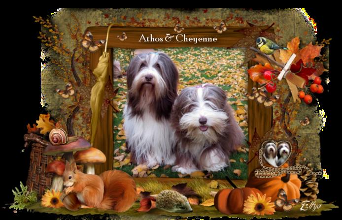 ♥ Belle semaine d' Athos & Cheyenne ♥