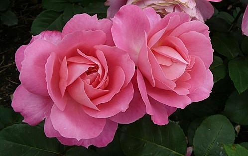 Rose-Sylvie-Vartan--18-6-10--P016.JPG