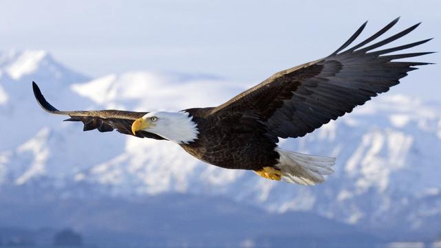 Symbolique de l'aigle