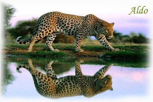 PPS Miroir des eaux