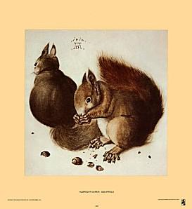 duerer-albrecht-ecureuils