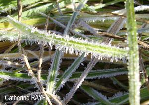 Cristaux d'eau - images d'hiver