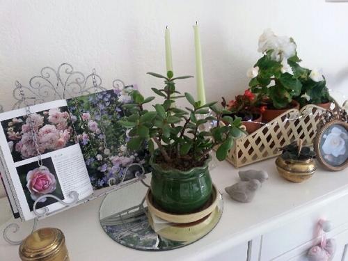 Des bégonias dans la maison