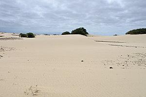 désert de viana5