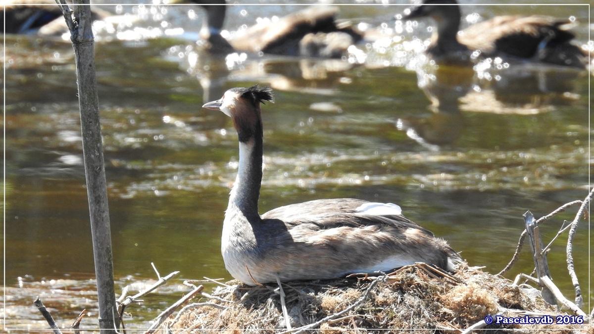 Réserve ornitho du Teich - Août 2016 - 10/12