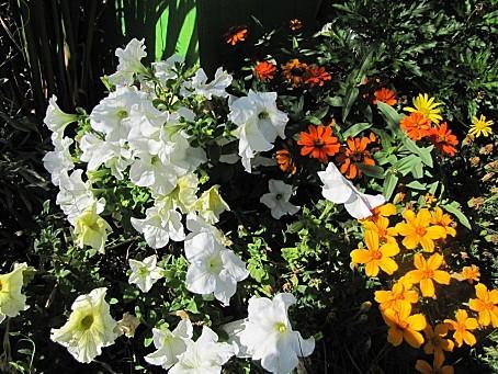 fleurs-7674.JPG