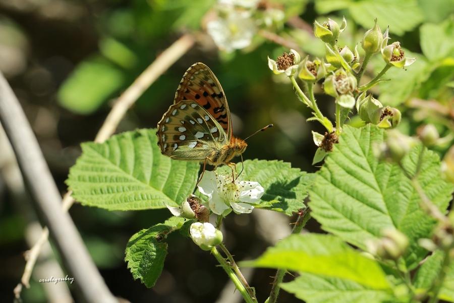 Papillon dans la lumière
