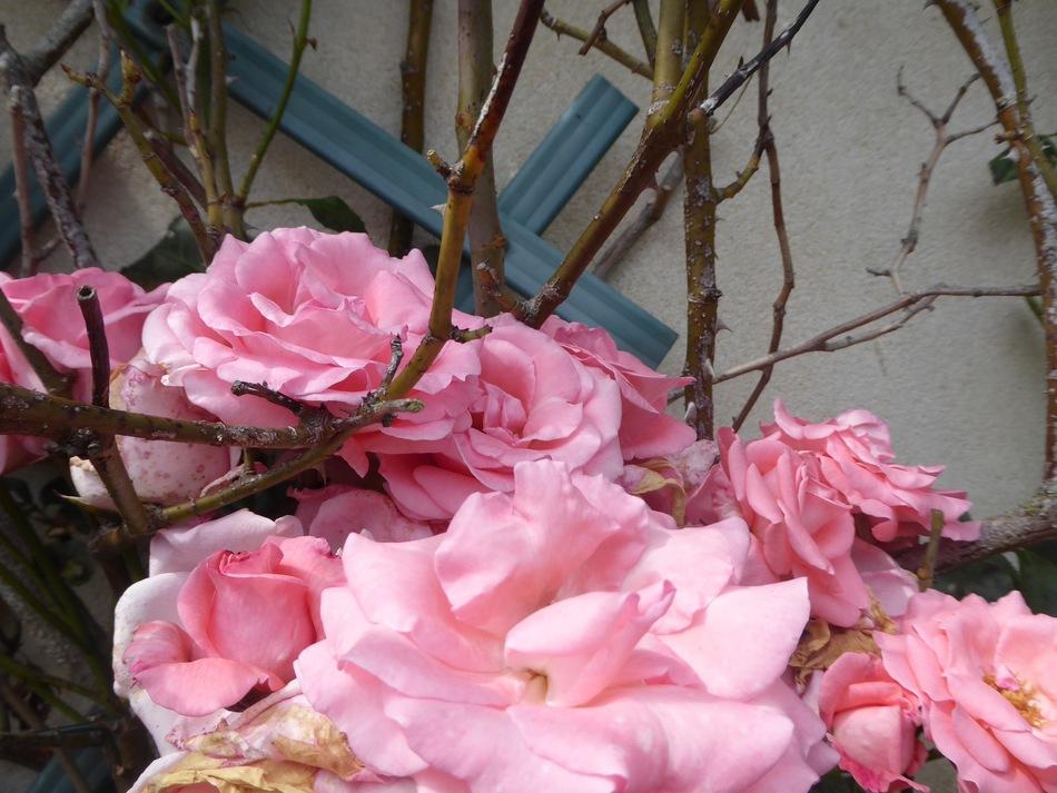 Toujours des fleurs mais au soleil!