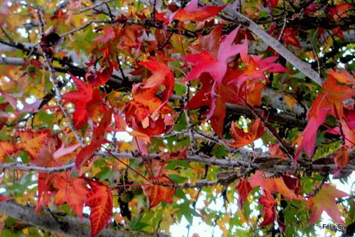 L'écorce et les feuilles rouges