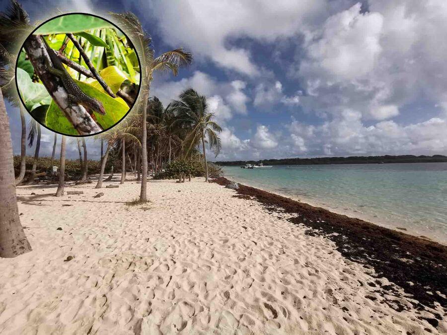 « La Guadeloupe–L'Île papillon 3 »