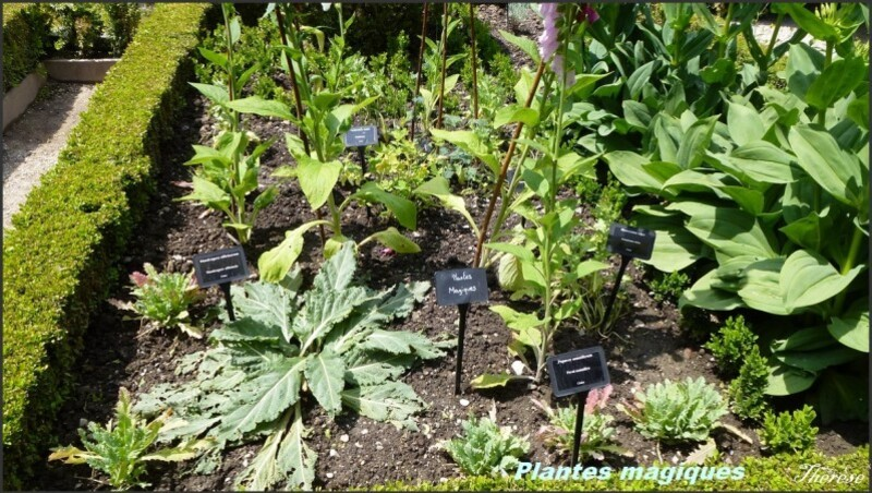 Cloitre plantes magiques (1)