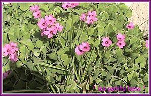 Fleurs pâques 2010 007cadré GF