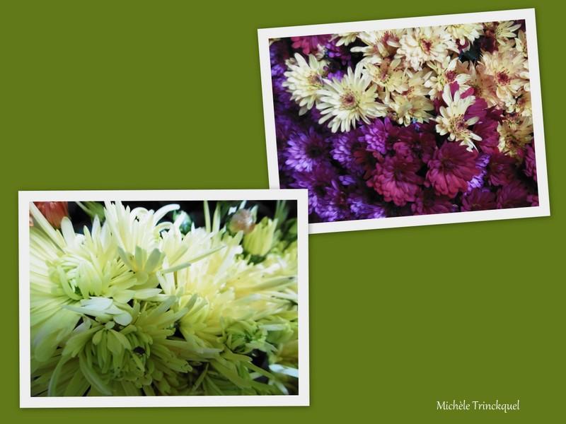 Les Chrysanthèmes de la Toussaint...
