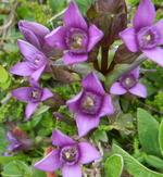 Fleurs de juillet aux Gloriettes