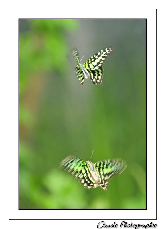 Le Paradis des Papillons - Sanguinet - Landes