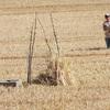 Pauline prépare le nid de Busards Saint-Martin (Cucharmoy 6 juillet 2015) © Joël Savry