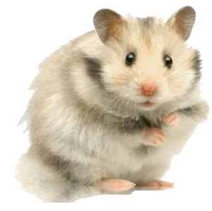 Souris,hamster etc