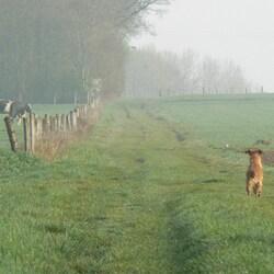 Devant et légèrement à droite du chien, un lièvre qui détale