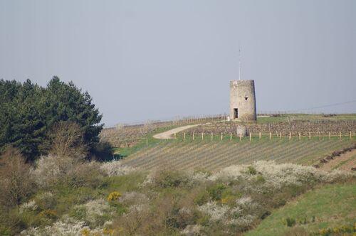 Saint Aubin de Luigné (fin du circuit)