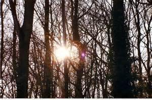 soleil-4.jpg