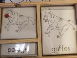 Cartes de nomenclature-Loup
