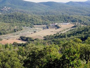 Zoom sur le domaine de Tamary, ses vignes et ses oliveraies