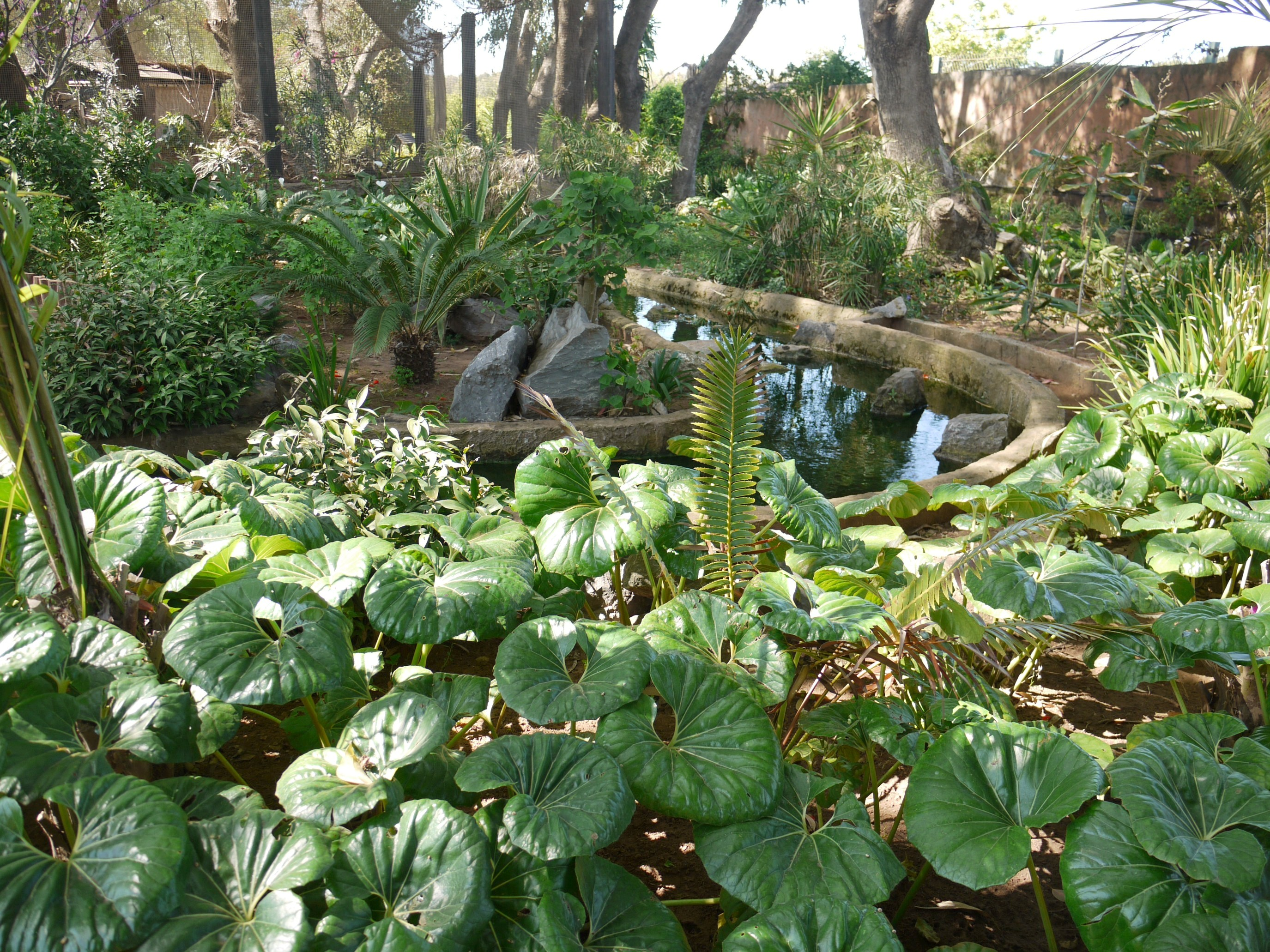 D co jardin exotique rabat nice 26 jardin deden angers jardin des tuileries pokemon go - Cabane de jardin sans dalle aixen provence ...