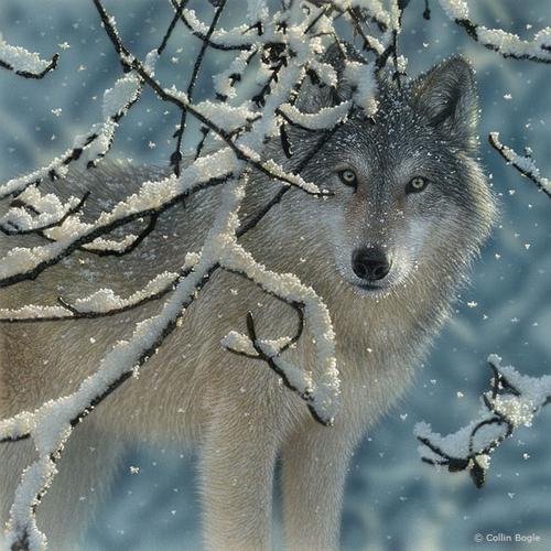 Loups Série 5