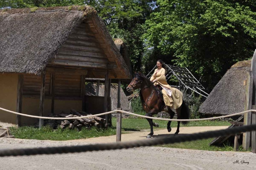 cheval-cavaliere-3809.jpg