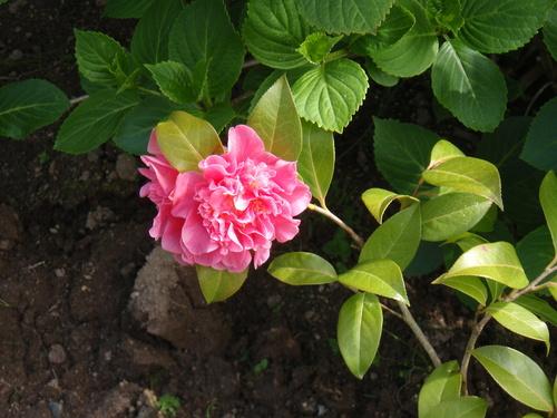 Le jardin au mois de mai
