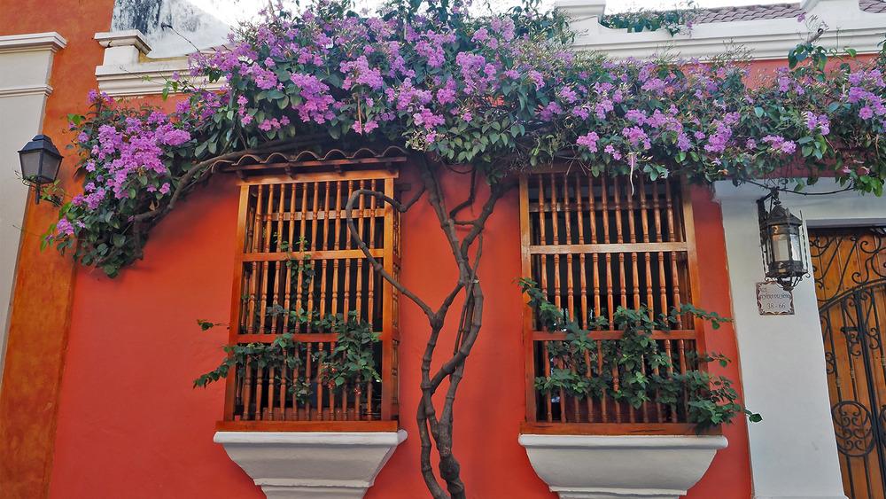 Carthagène, paradis des fleurs et de la couleur 28/1