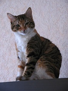 chat-goutier(2)