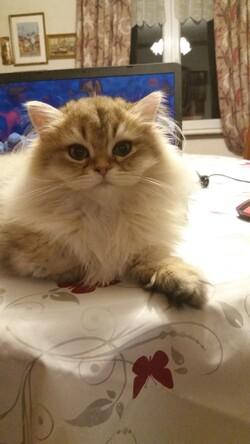 ***palettes de chatons***
