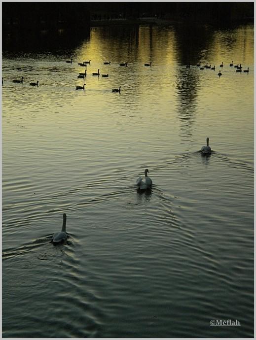 30 octobre 2011 Coucher de soleil sur le lac Daumesnil 3