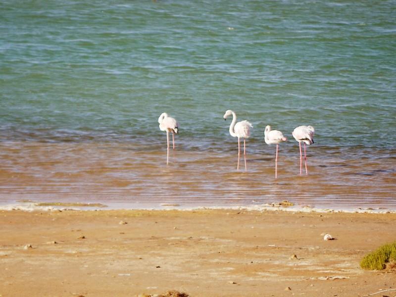 Lagune de Naila