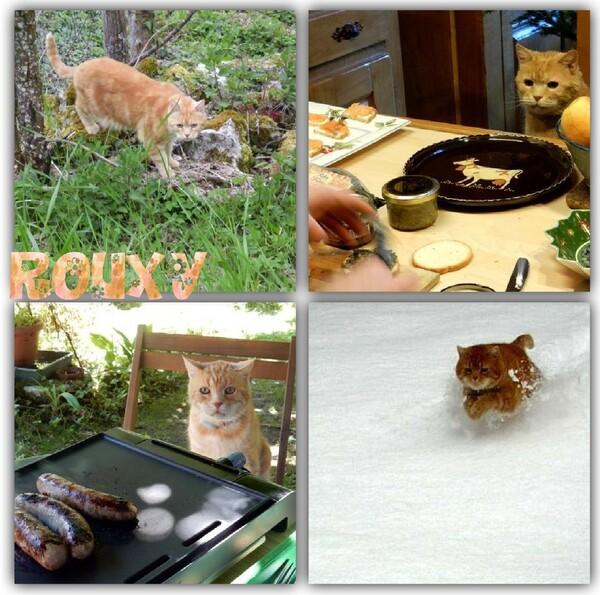 Notre ami RouXy est parti ...
