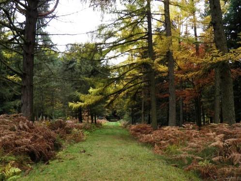Arboretum 3