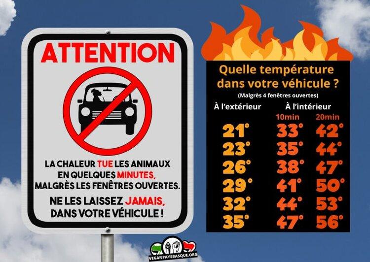 Pas laisser les animaux dans une voiture en pleine chaleur