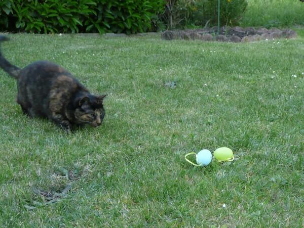 Chasse aux oeufs de Paques et chat