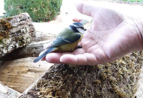 Le repas des oiseaux