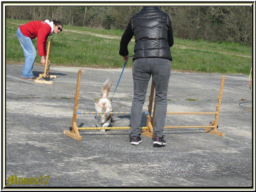 """1er entraînement de Gaïa et particpaton du petit Lemon chez les """"Cabots d'Oléron"""""""