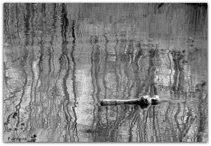 reflets et mirages au fil du Rhône